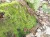 мох и грибы