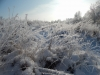 кристаллы льда на ветках