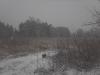 снег и собачка