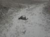 собачка на снегу качается