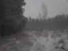 заснеженная опушка леса