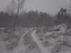 заснеженная дорога в лес