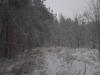 заснеженная дорога под лесом
