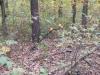Garret ACE на копе  в лесу