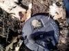 находка монеты Нел Шарп 2 рубля