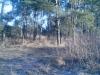 зимний лес  в январе