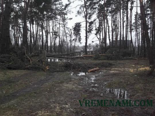лесной луг