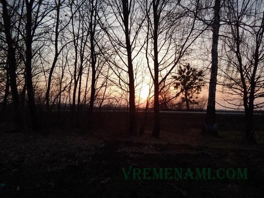 солнце над линией горизонта в лесу