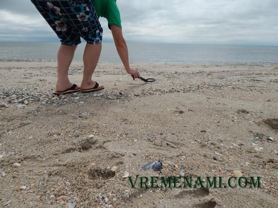поиск с металлоискателем TS-80 на пляже