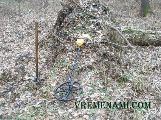 одно из павших деревьев на болоте