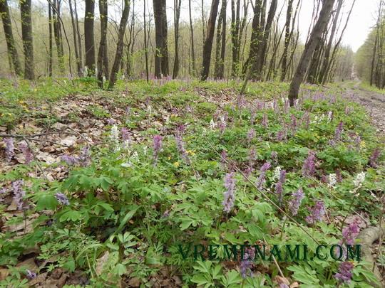 весенний лес, цветы