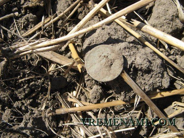 монета долгожданная находка